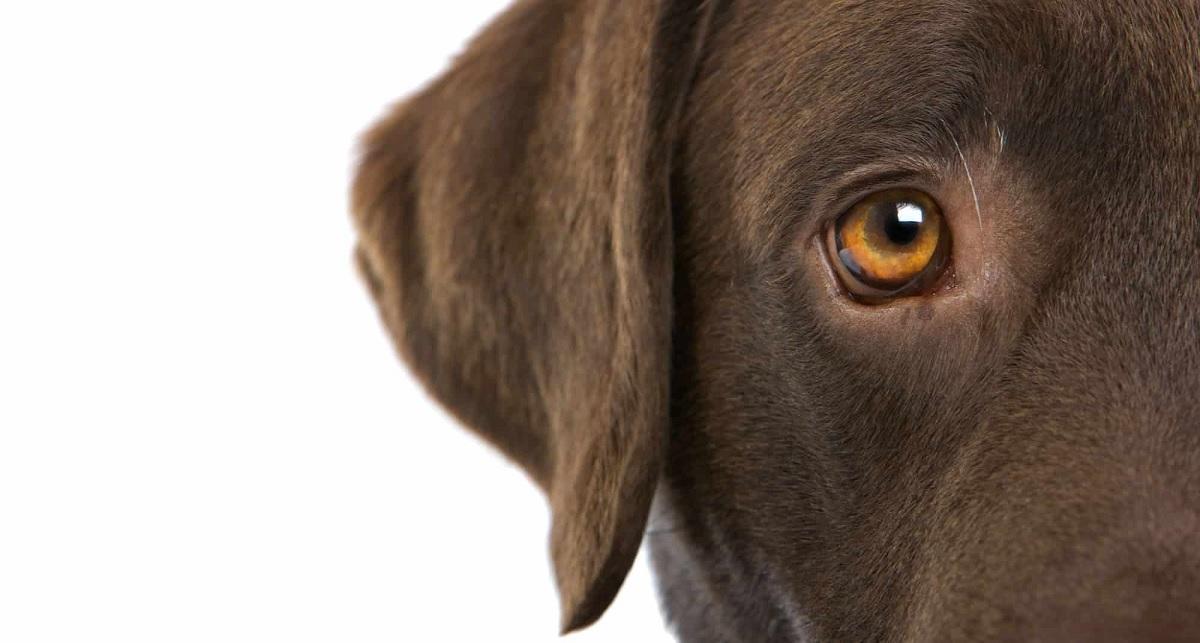 HORRORISZTIKUS - Szúnyogirtás miatt vakulhatott meg egy kutya