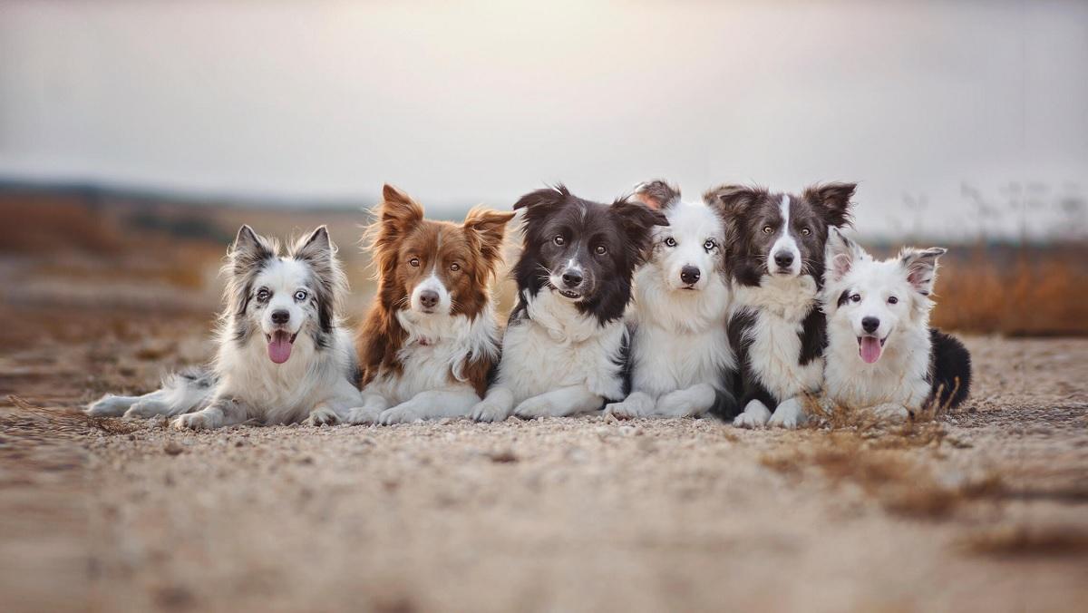 Újabb ZÖLD ELMEBETEGSÉG: A kutyák is tehetnek a klímaváltozásról!
