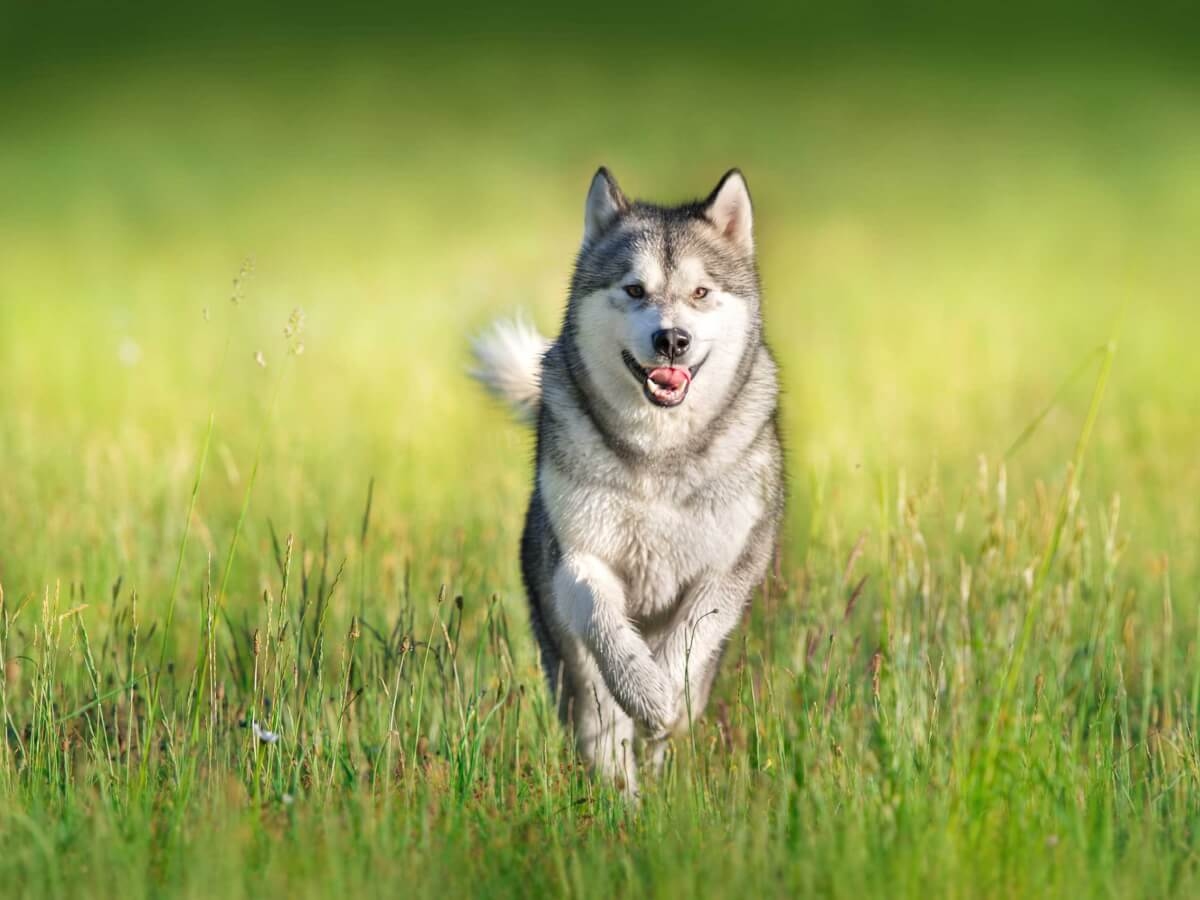 Az öt legszebb kutya - SZERINTÜNK!